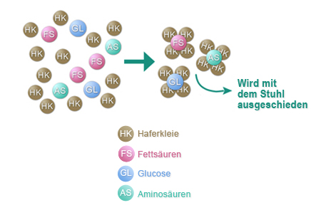 Schematische Darstellung der Wirkung von Haferkleie